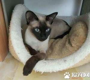 a_暹罗猫打滚是什么意思 暹罗猫打滚的常见两个含义[新闻]