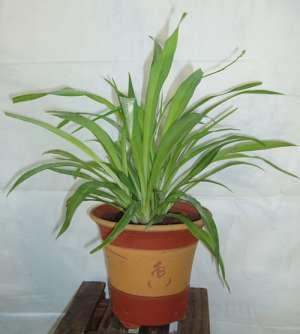 吸甲醛最好的植物排行 用植物去甲醛真的有用吗资讯生活