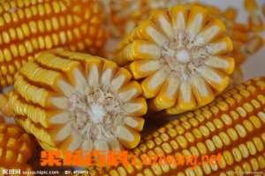 玉米深加工工艺流程