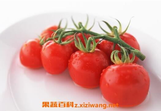 孕妇能不能吃小番茄 孕妇吃小番茄的好处和坏处